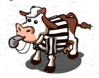 Schiedsrichter-Kuh