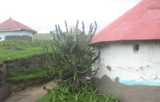 Baum direkt neben einer Hütte