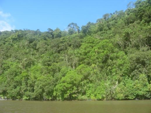 Wand aus Bäumen am Flussufer