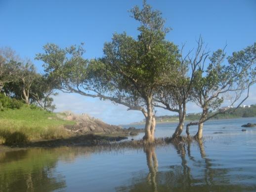 Bäume am Flussufer