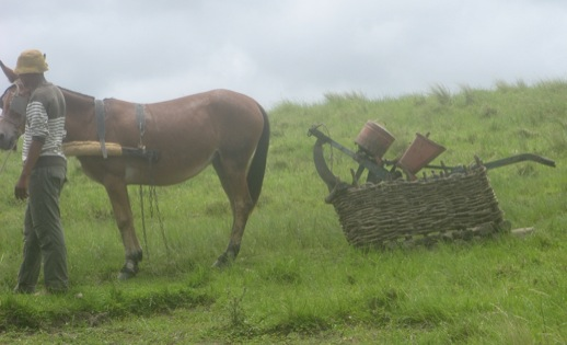 Pferd mit Pflug