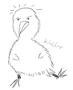 Freudentanz-Kiwi mit Glatze