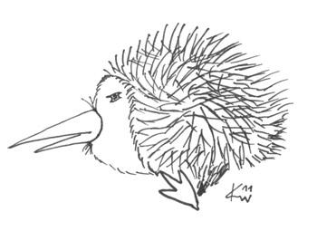 Igel-Kiwi