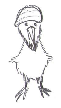 Osama bin Kiwi