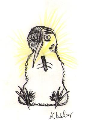 Kiwi mit Taschenlampe (Kiwi der Woche)