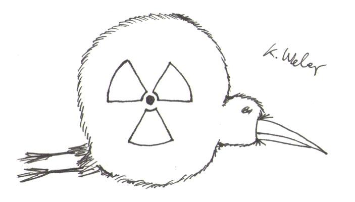Atomverseuchte Kiwi-Schnecke (Kiwi der Woche)
